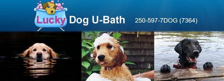 Save 50 on a self serve dog u bath with lucky dog u bath in duncan slide 1 solutioingenieria Image collections