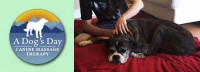 A Dog's Day Canine Massage Therapy in Comox